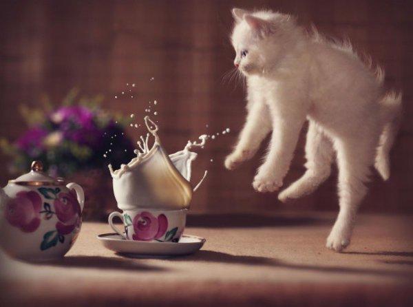 Такому милому котенку все можно простить