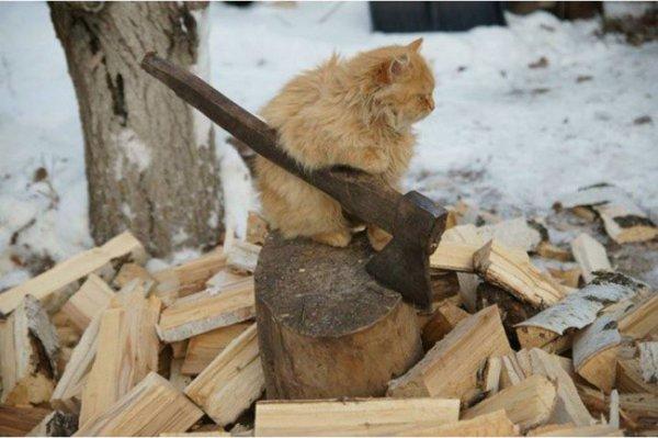 Когда весь дом держится на коте