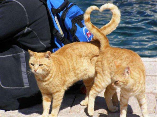 Они несут в себе любовь