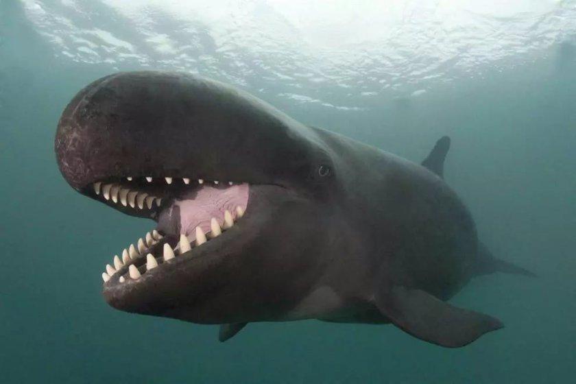 Улыбка кита, покорившая многие сердца